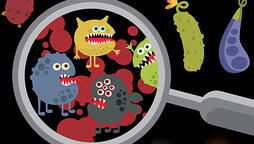 Salmonella is a leading cause of food-related medical problems. Illustration: iStock.com